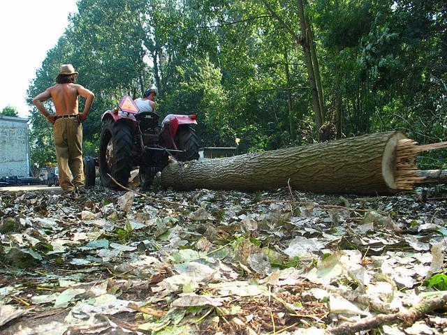 Het Domijn 2004 bomenkap achter loods B