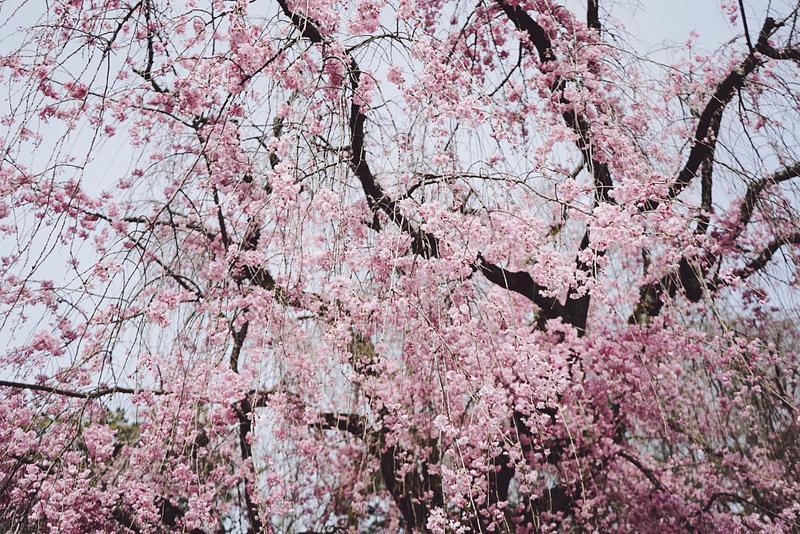 Japan, Spring