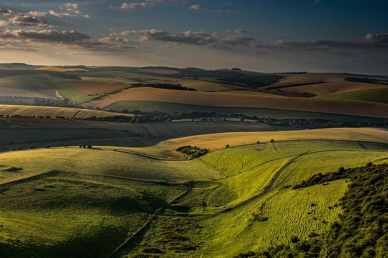 Golden light in Sussex