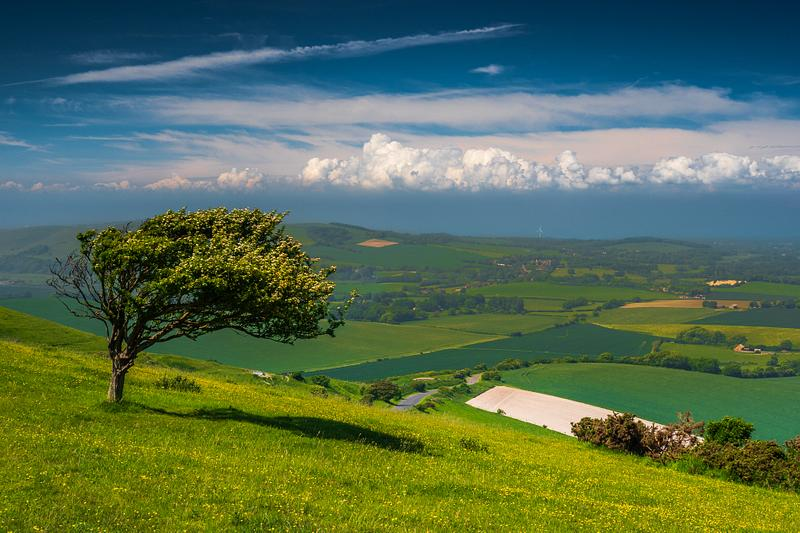 Lonely tree of Firle