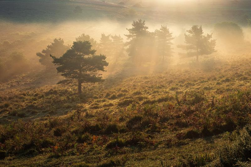 First light at Ashdown Forest