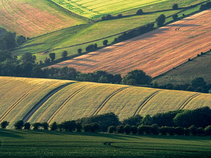 South Downs Patchwork