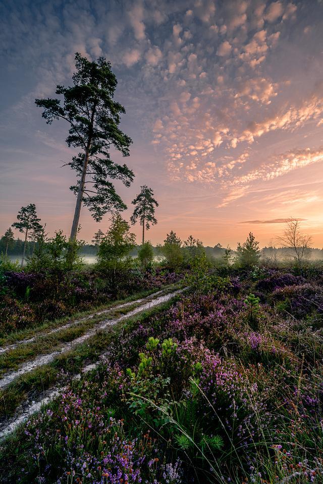 Lavington sunrise