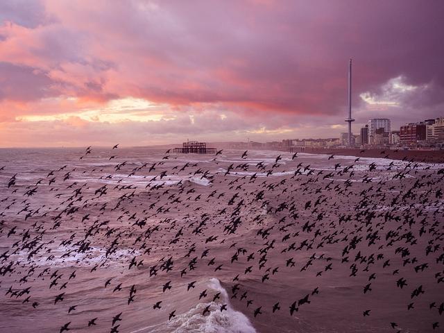 Sea of Starlings