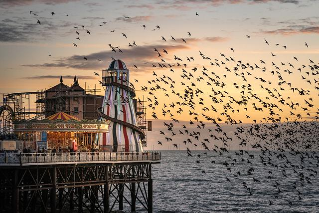 Starlings at the Helter Skelter