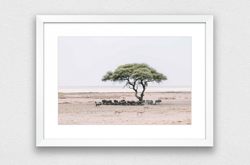 Wildebeest Family