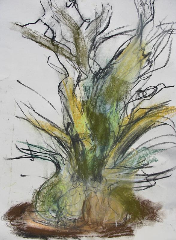Onion Tree