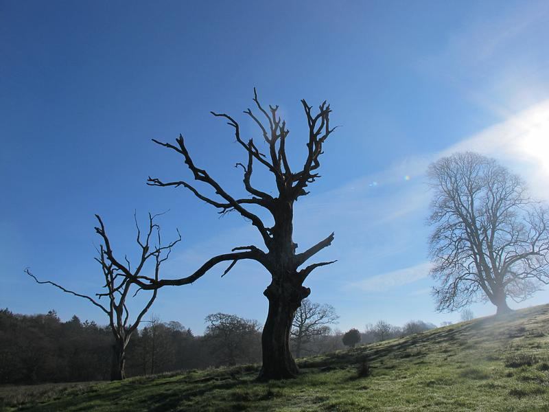 One of the dead trees Parkland