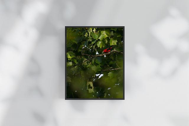 Fine-Art Print | Tanager