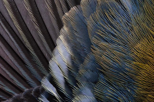 Fine-Art Print   Feather
