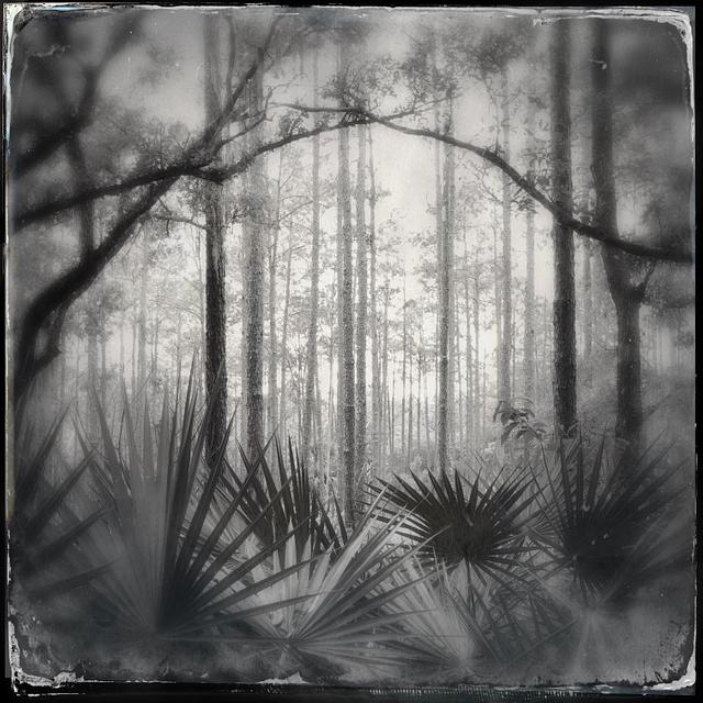 Florida Forests