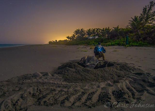 Researcher collecting data on an endangered leatherback sea turtle