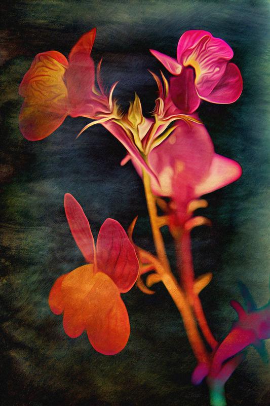 Slender Foxglove