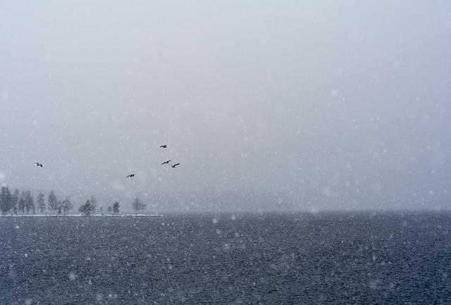 Birds in snowfall