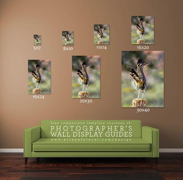 Greater Roadrunner Wall Art, Bird Lover Gifts, Wildlife Photography, Southwestern Decor