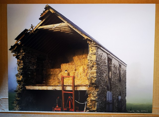 The Barn Cat 12x16 inch