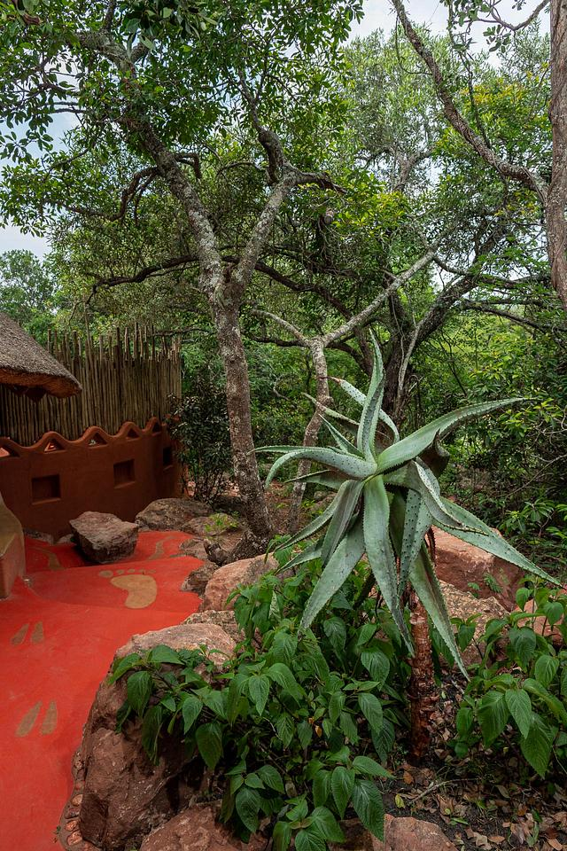 Polished Concrete With African Designs and Large Aloe Plant — Leshiba Wilderness Reserve