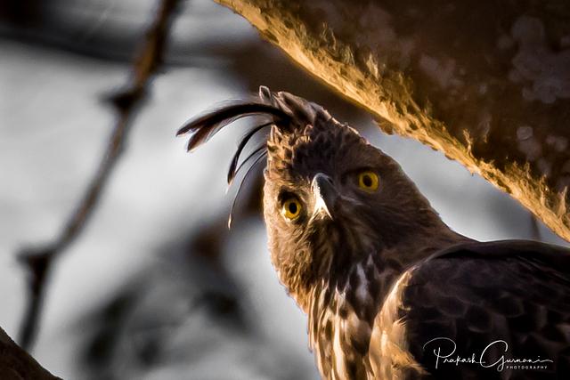 The Birds of Kabini
