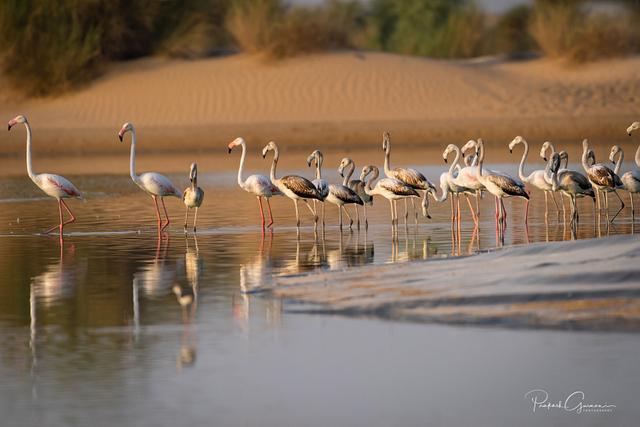 Al Qudra Bird Sanctuary