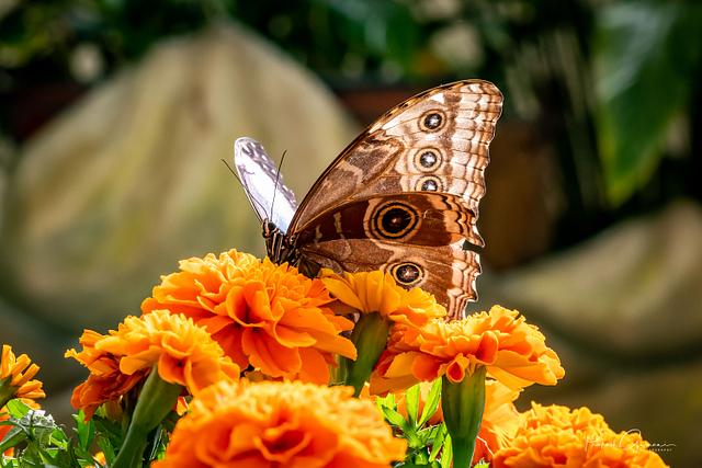 Dubai Butterfly Park