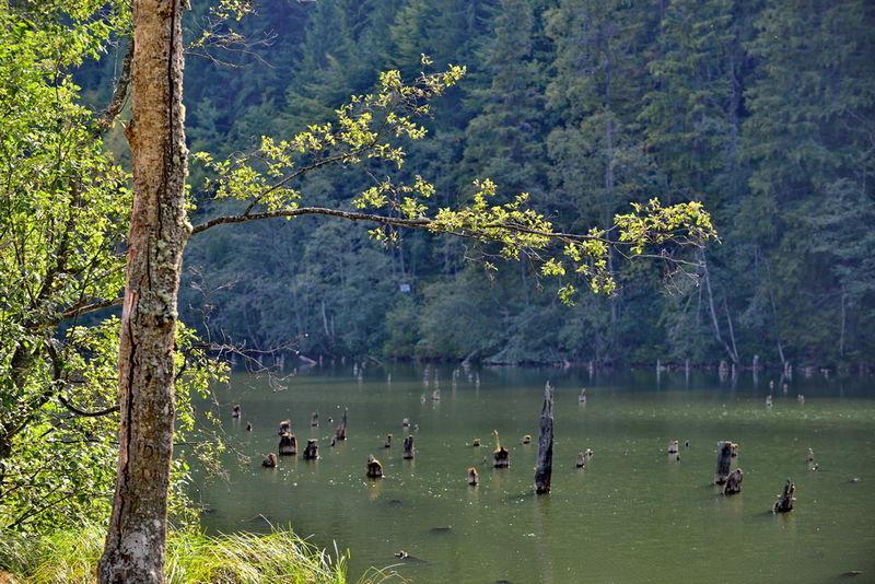 Lacul Rosu 0001