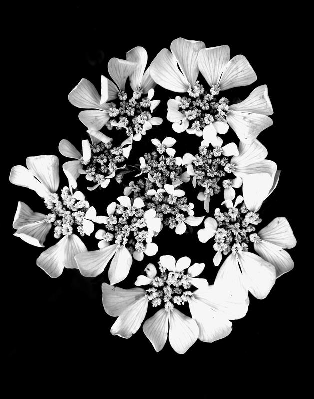 Color Blind Flowers In Black And White Al Levin Photographer