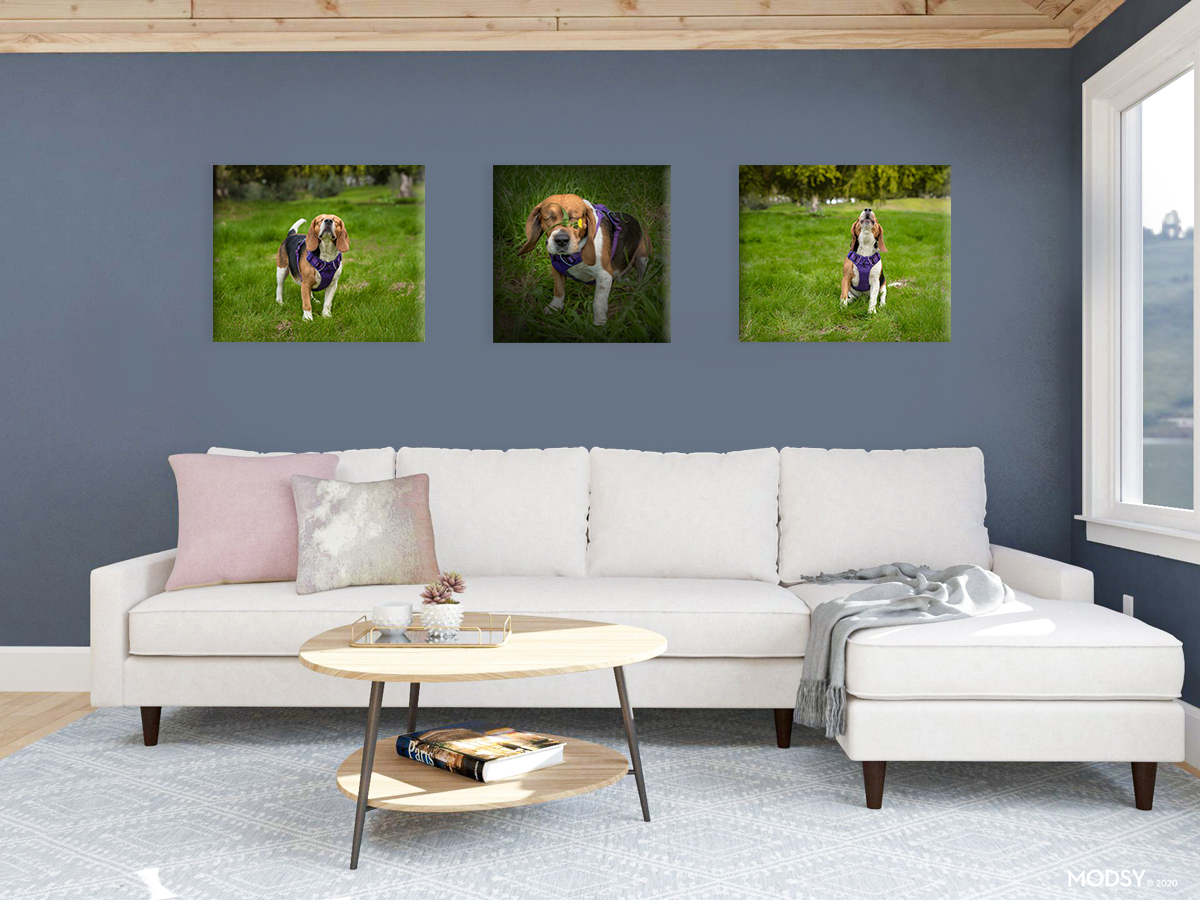 See your portraits on your own walls