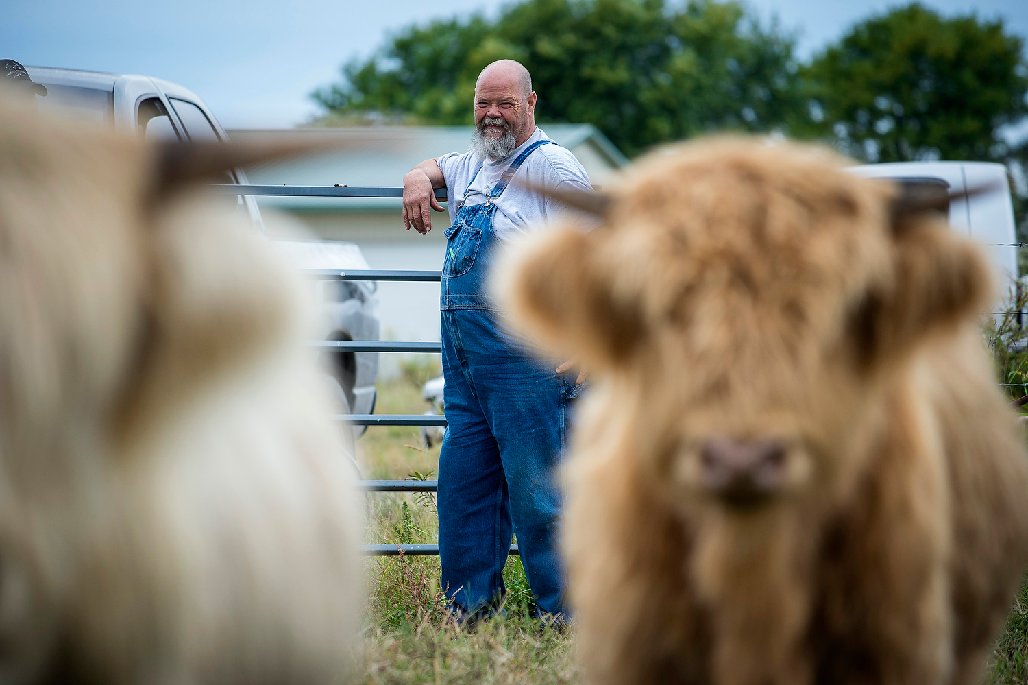 Phil Scritchfield, 65, looks over the Scottish Highland cattle that he and his wife raise just outside Eldon, MO. When they first started, six years ago, they had only three animals. They have forty now.
