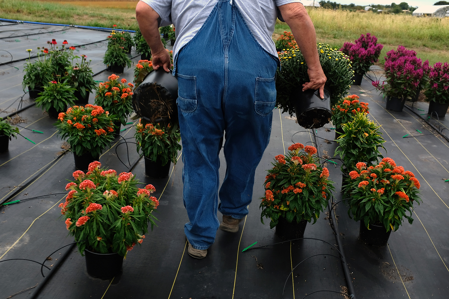 During his day off, Phil visits a Mennonite farm to buy flowers to decorate the front porch of his house.