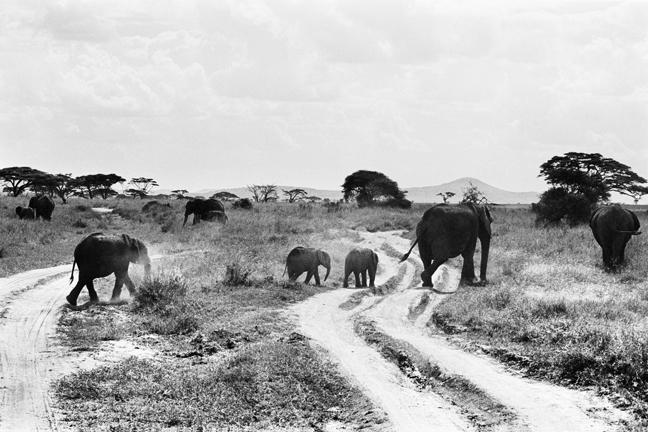 Elephant - 4, Serengeti 2016   Edition 1 of 2