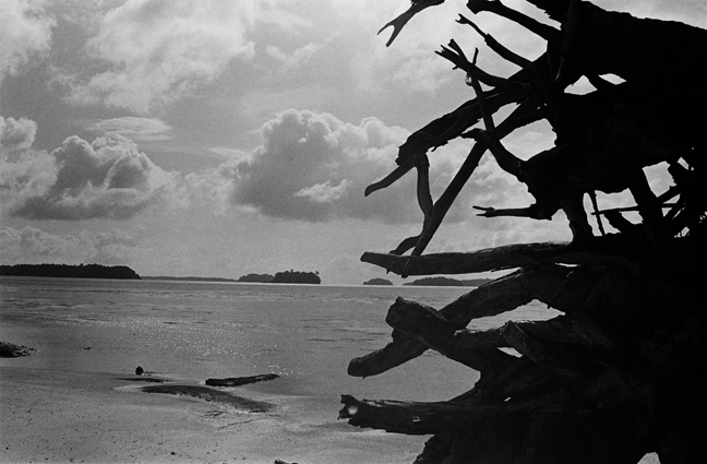 Roots, Andaman Islands 2010   Edition 2 of 5