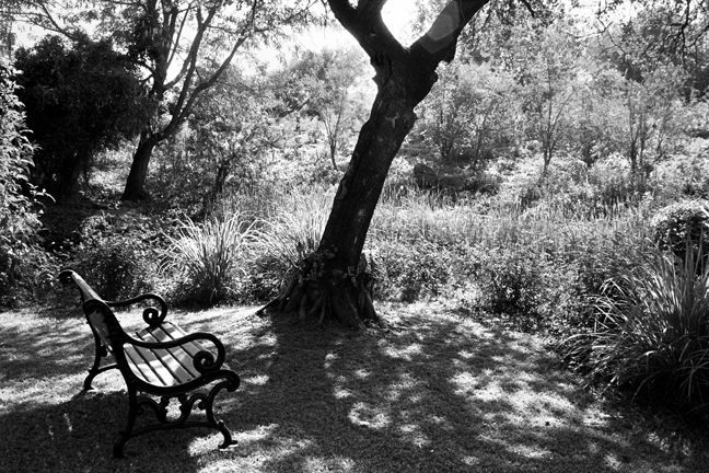 The Bench-2, Ranthambore 2018   Edition 1 of 2