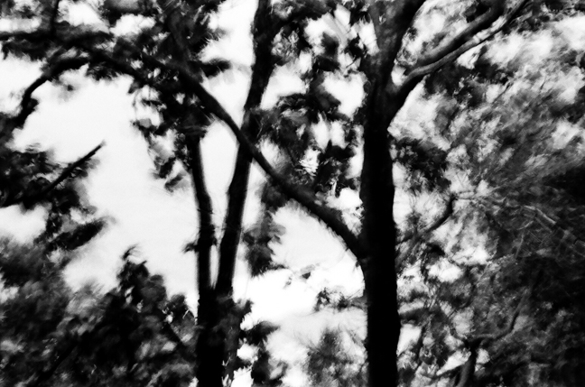 Trees in the Rain, Rishikesh 2011   Edition 1 of 2
