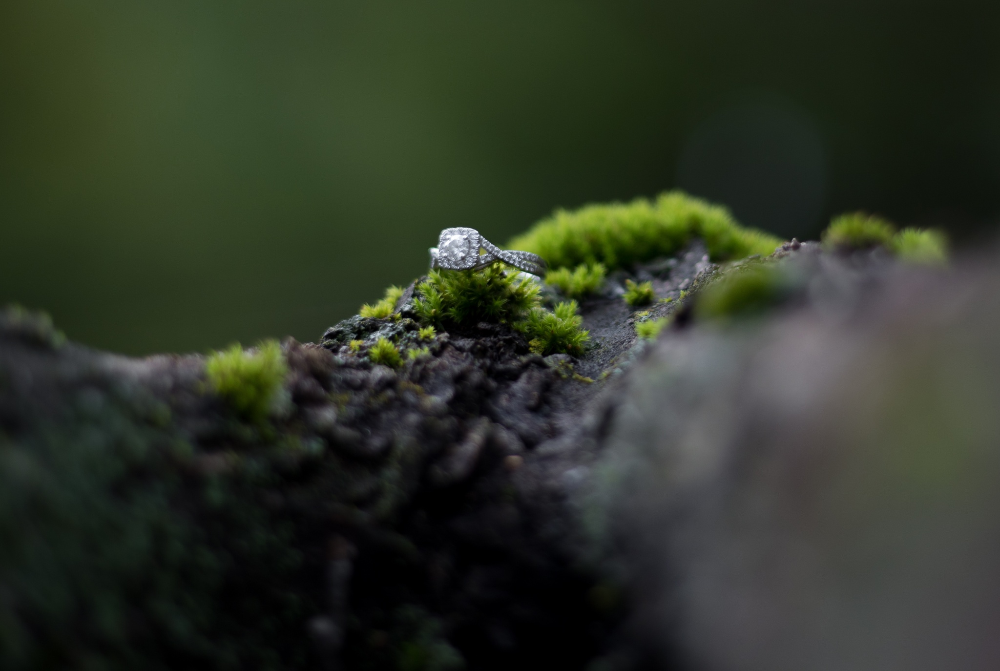 Woodland Engagement |  Hayley + Cornell