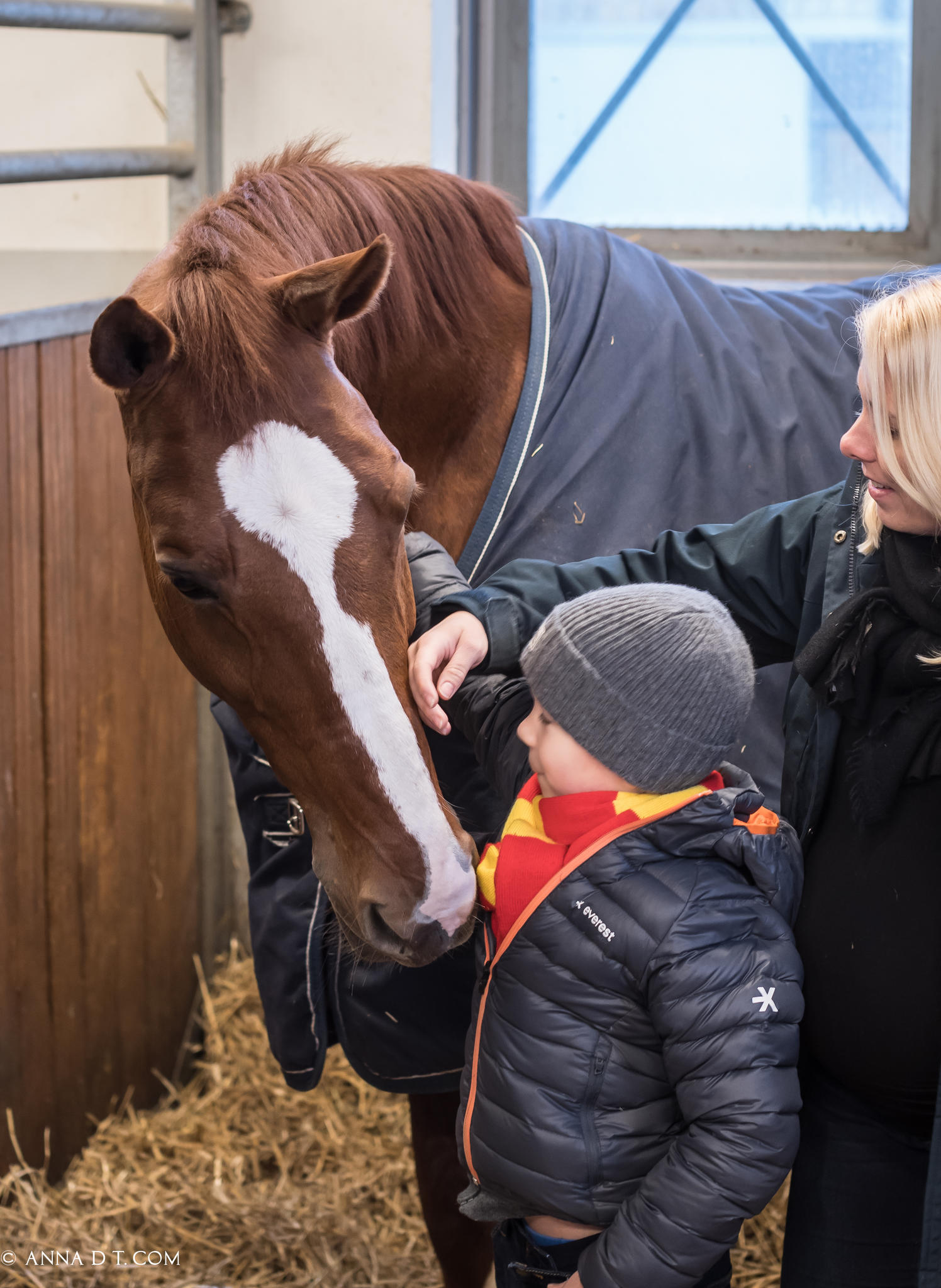 Magical Connection Between Horses and Kids