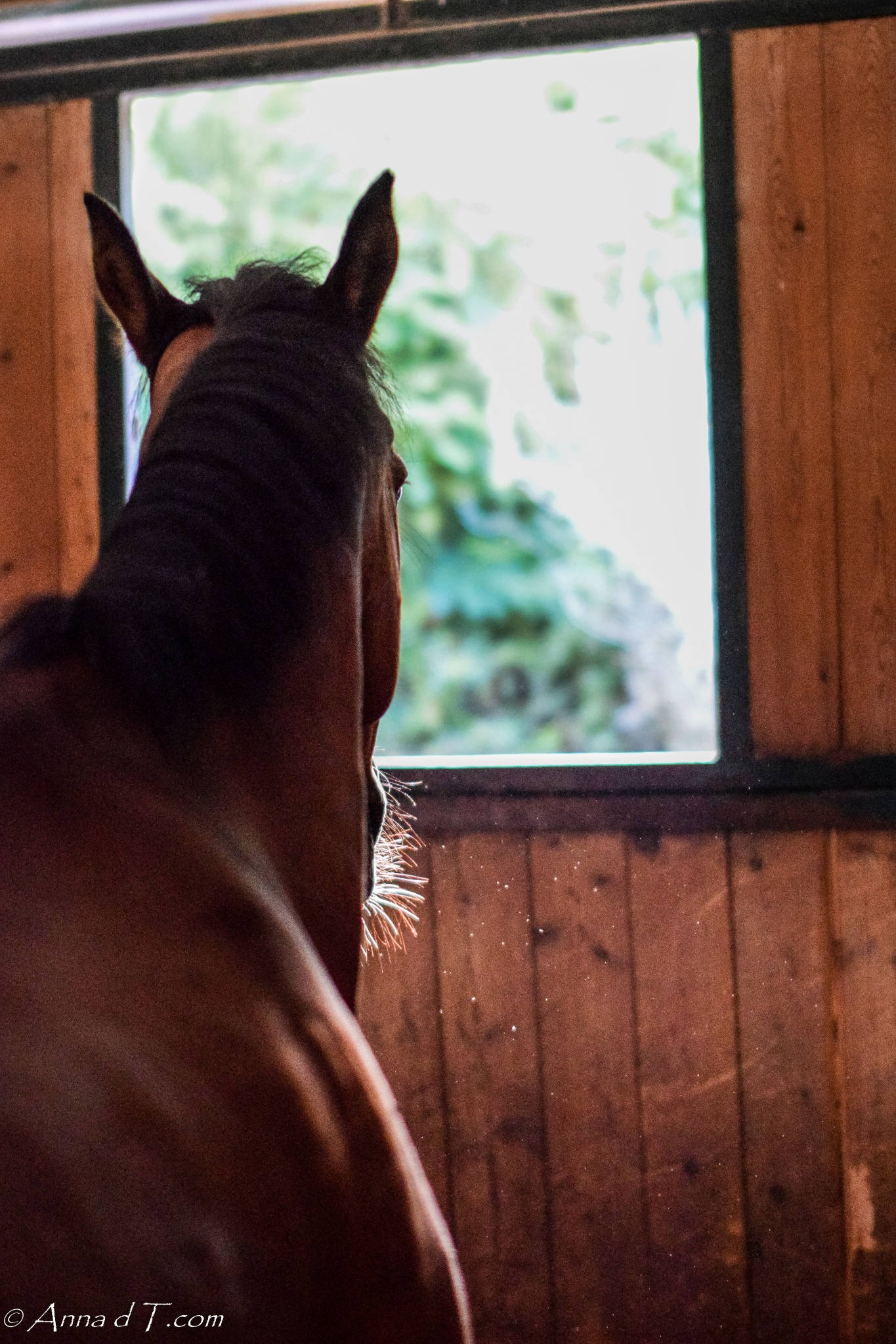 Il Paretaio Riding Center in Tuscany, Italy