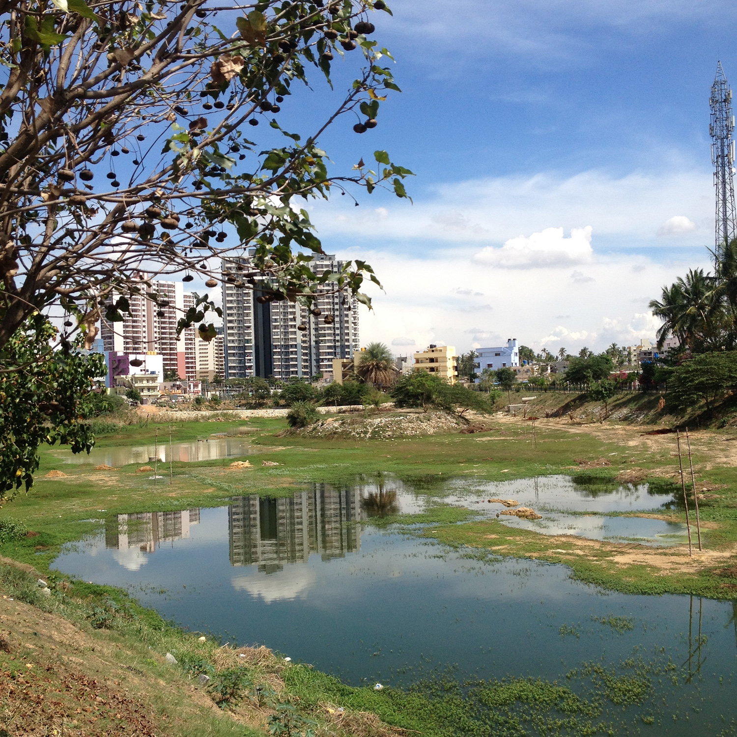 Bangalore Lake Diaries
