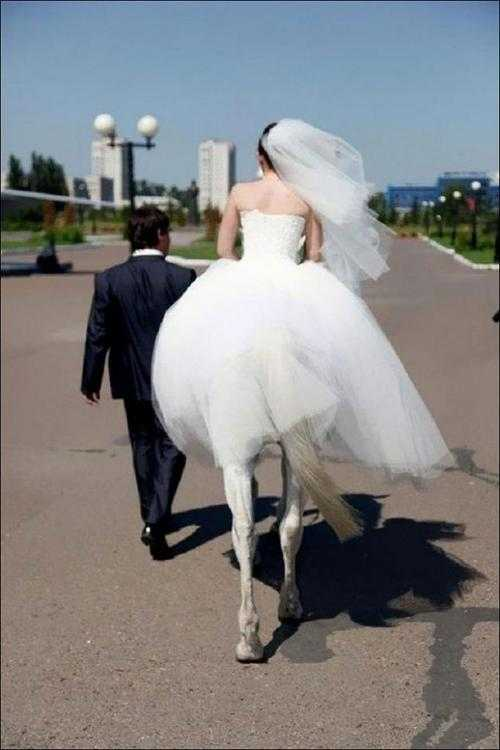 The Bridal Horse