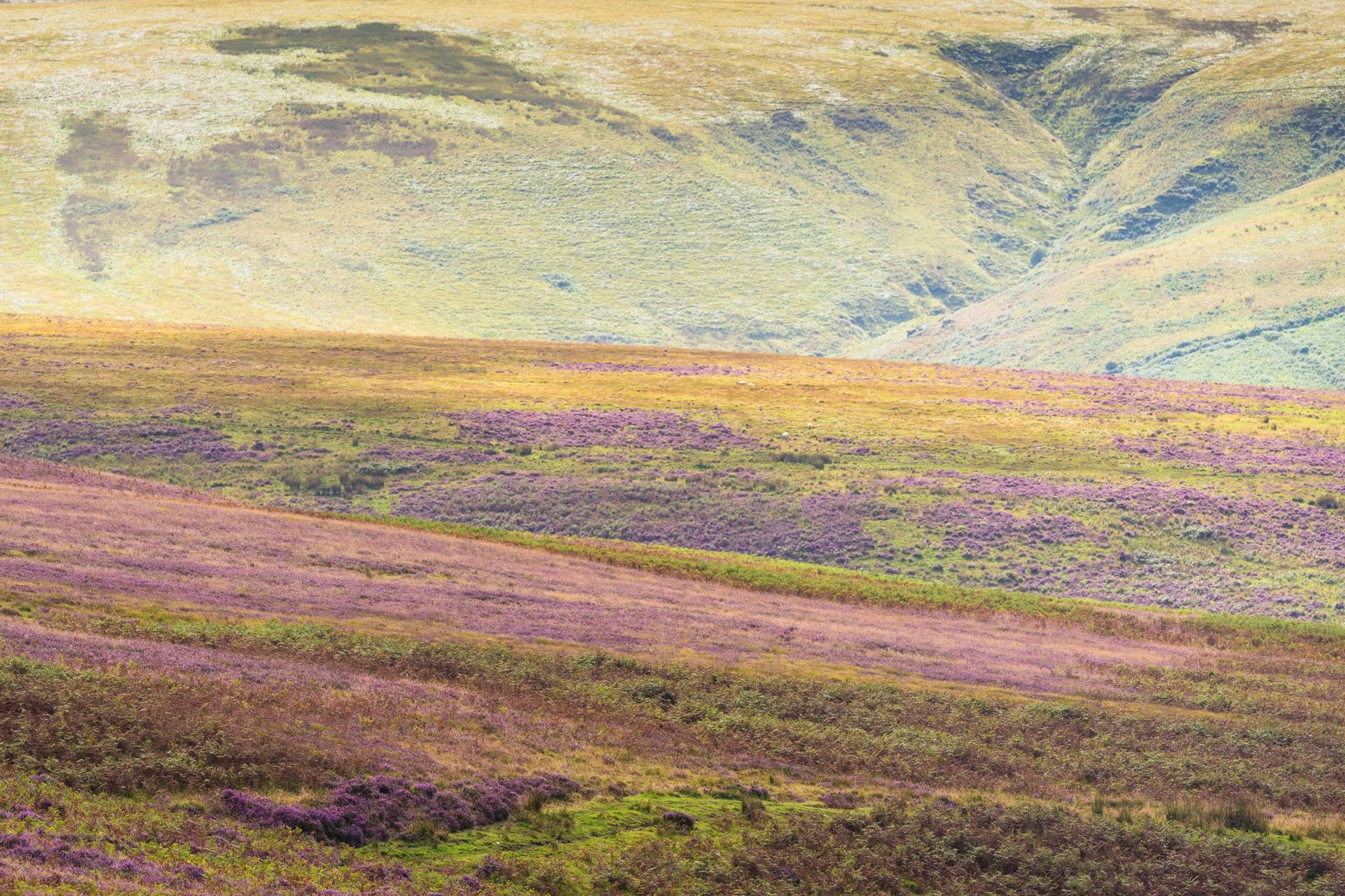 Sprookjesachtig Exmoor