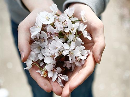 girl holding flower blossoms in hand