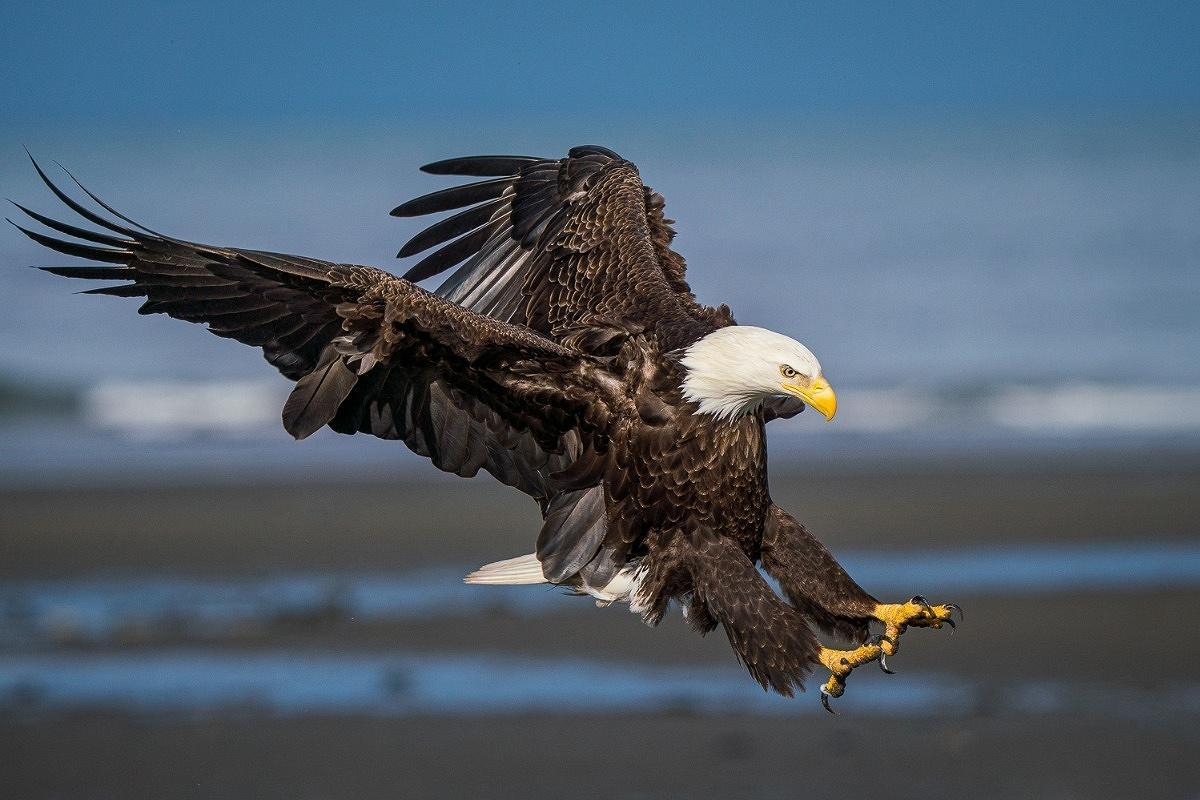 Washington Eagles Photography Workshop