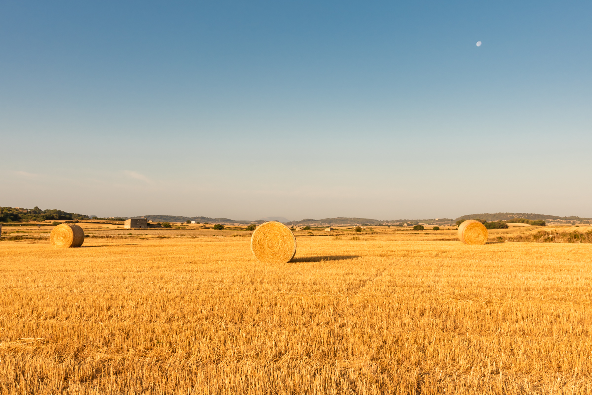 Hay bales, sunrise light and the moon. Mallorca countryside. Balearic Islands