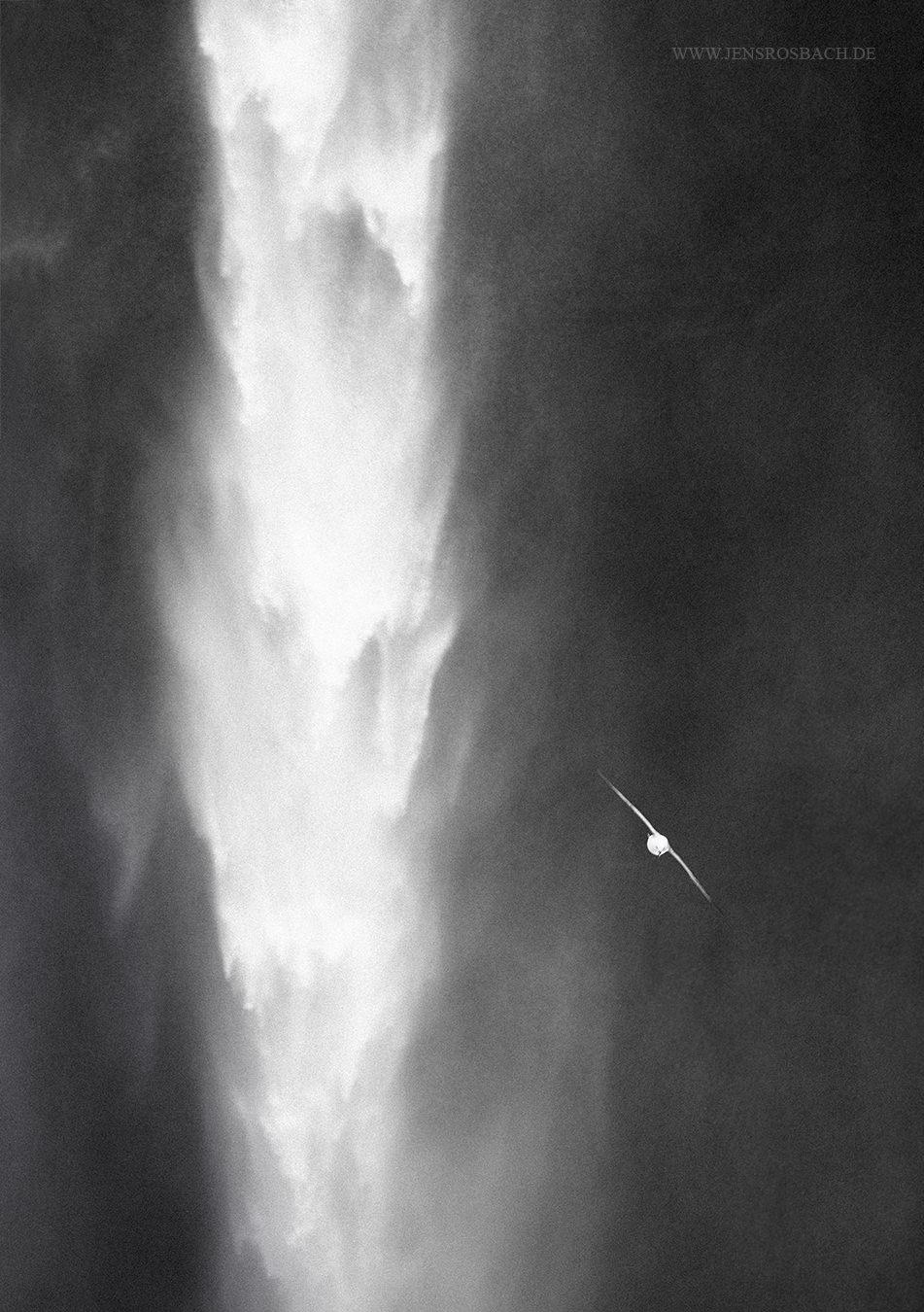 Waterfall Bird, Skogafoss