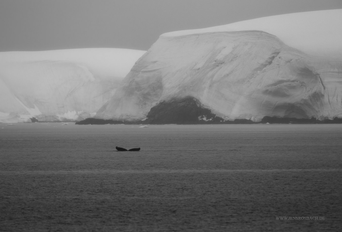 Whale and Glacier