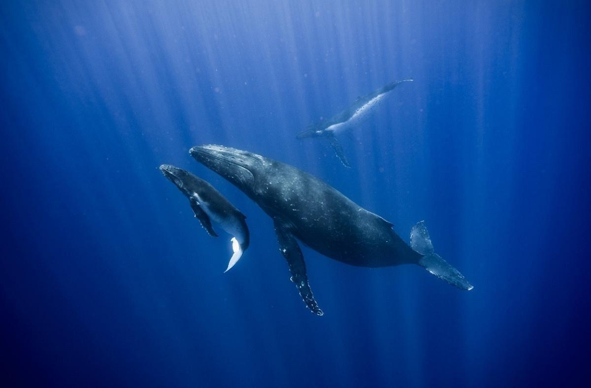 humpback whale workshop