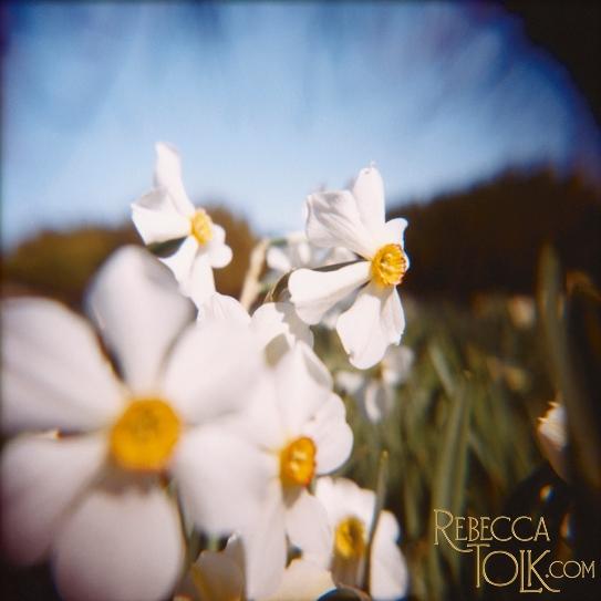Rebecca Tolk Holga Camera Fine Art Nature Photography