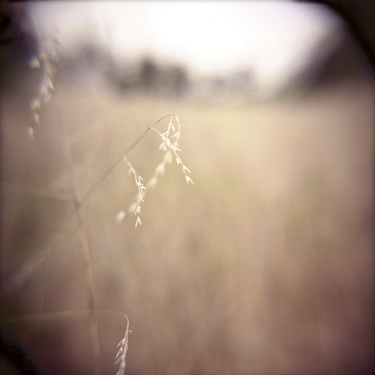 Rebecca Tolk Photography Holga camera photograph - The Journey