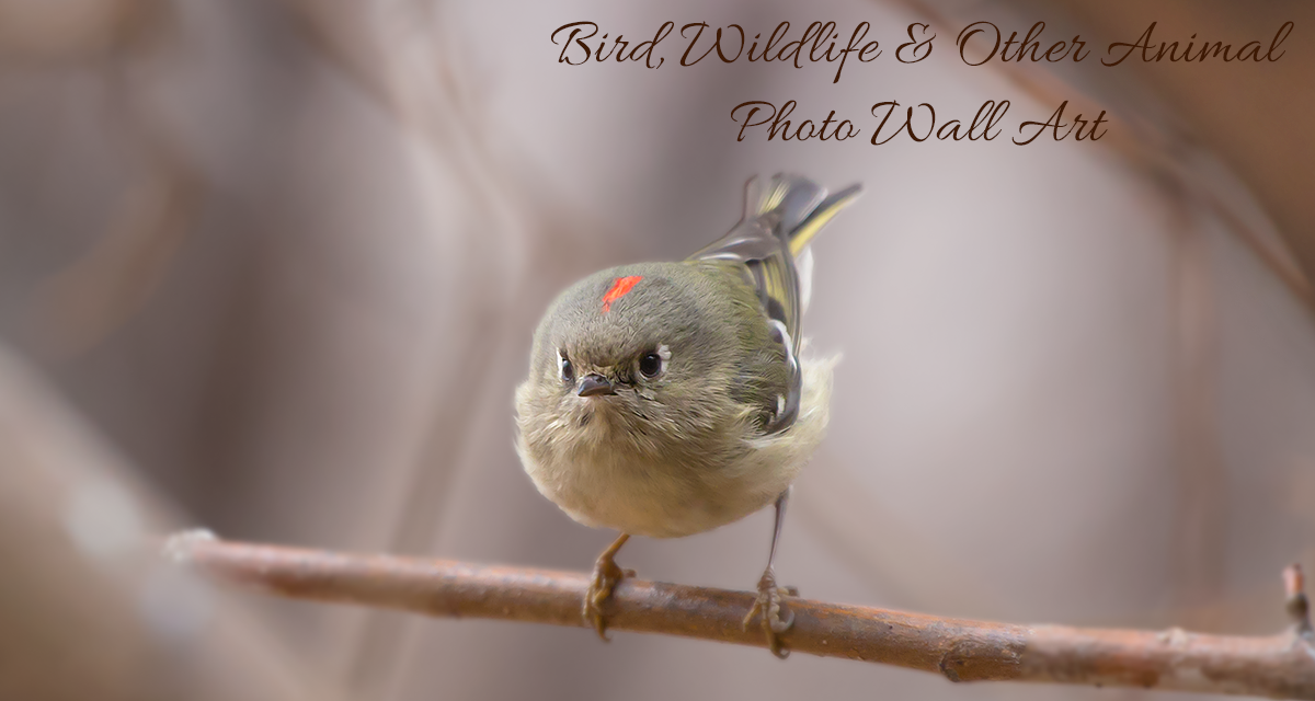 Bird, wildlife and other animal photo wall art