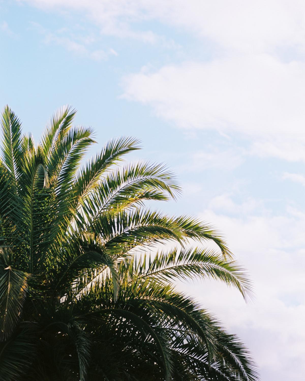 Palm tree on Kodak Ektar