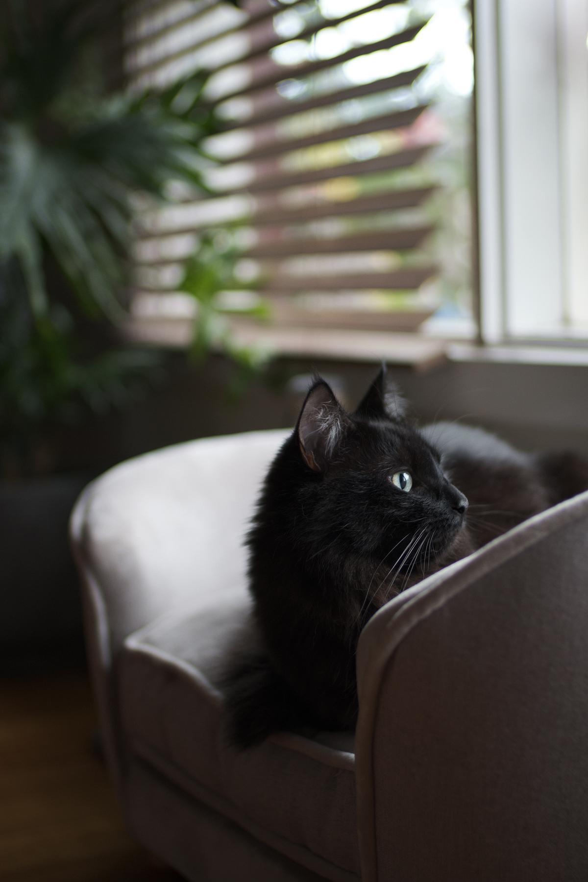 Winchester watching the rain